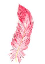 Flamingo Feather