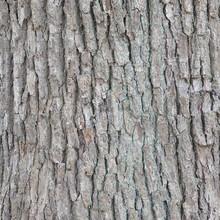 Bark Of Elm  Seamless Tileable Texture