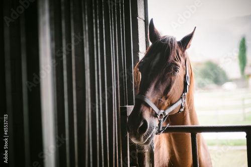 Fototapeta Horse obraz