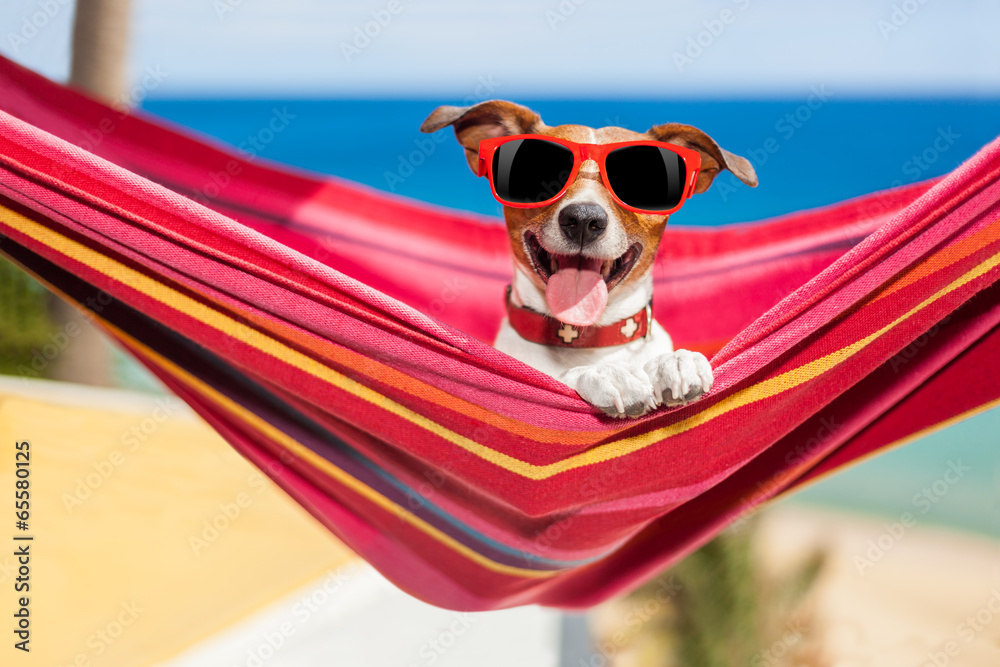 Fotografering  dog on hammock