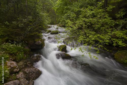 Aluminium Prints Forest river Schwarzbach river