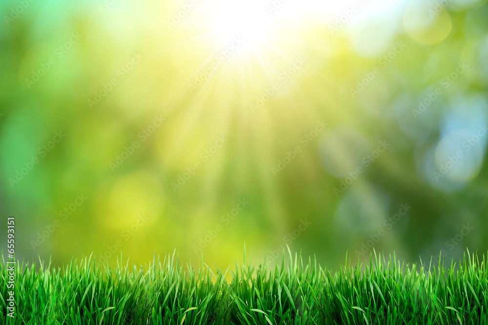 Fototapety, obrazy: Green grass with sunset views.
