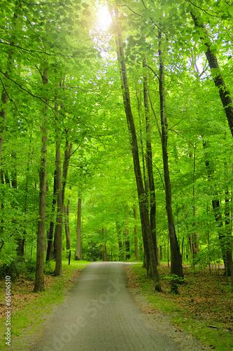 Foto op Plexiglas Bamboe Summer Trail in the Woods