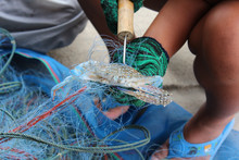 Fisherman Unpack Crab From Tra...