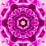 Purple Concentric Flower Center Mandala Kaleidoscopic design