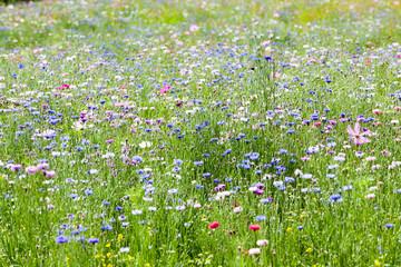 Fototapetaflower meadow