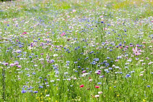 Foto  flower meadow