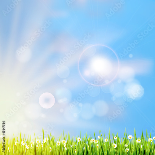 Foto op Plexiglas Groene Summer grass in sun light. EPS 10