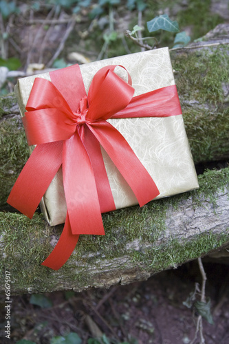 Fotografia, Obraz  Gift ready for a surprise/Gift box on branch with moss in woods.