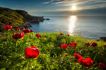 Obraz Sea sunrise and beautiful wild peonies on the beach