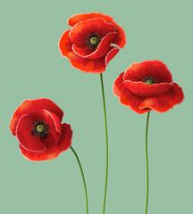 Fototapeta Poppy flowers.