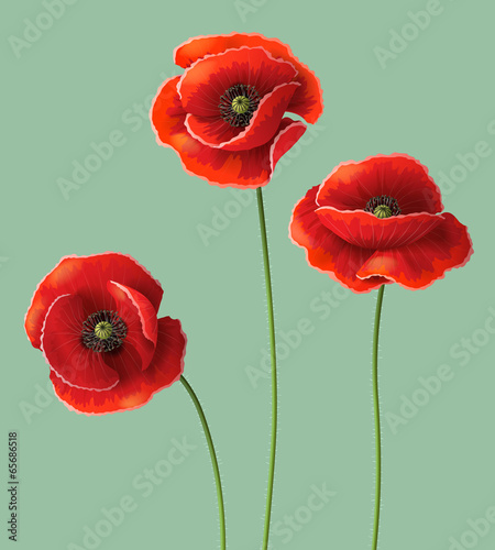 Poppy flowers buy this stock vector and explore similar vectors poppy flowers mightylinksfo