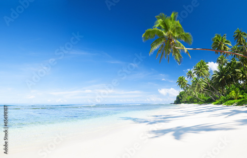 Spoed Foto op Canvas Caraïben Palm Tree on the Beach