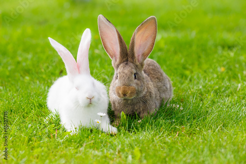 Two rabbits in green grass Fototapeta