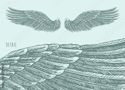 Fotografia, Obraz  angel wings  illustration, engraved style