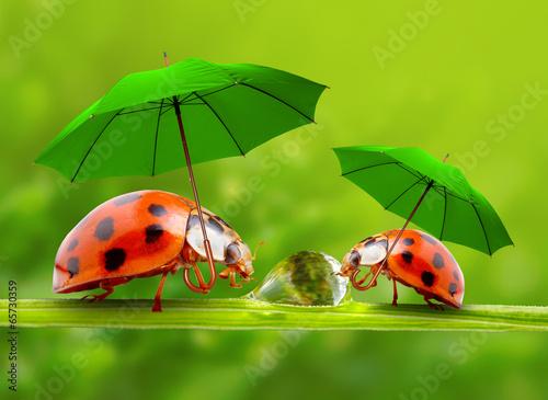Canvas Prints Ladybugs Little ladybugs with umbrella walking on the grass.