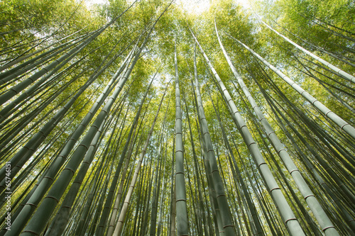 Foto op Plexiglas Bamboe bamboo grove, forest of bamboo grove in Arashiyama, Kyoto, Japan
