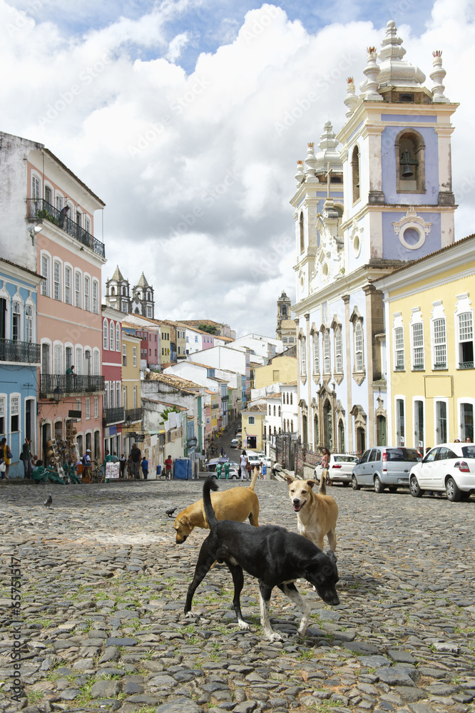 Foto  Stray Dogs in Pelourinho Salvador Brasilien