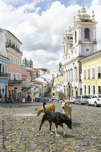 Foto  Stray Dogs in Pelourinho Salvador Brazil