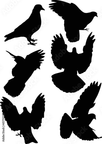 six black isolated dove silhouettes - Buy this stock vector