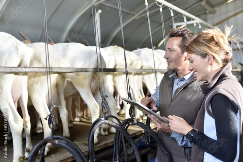 Fotografie, Obraz  Farmers using tablet in milking barn