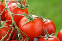 Lovely Fresh Small Red Tomatoe...