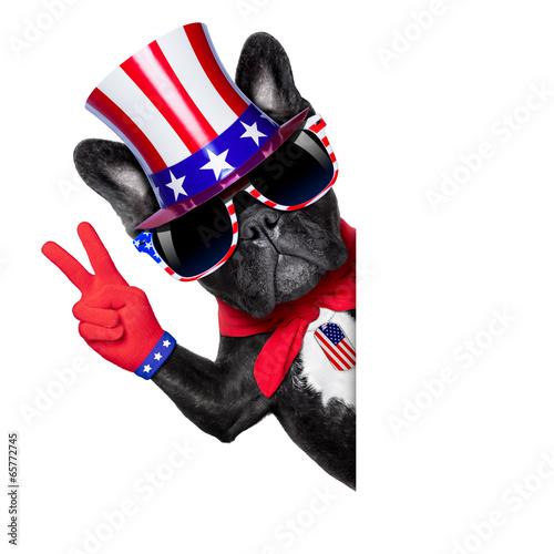 Fotografie, Obraz  american dog