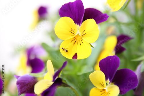 Fototapety, obrazy: Flora & Fauna