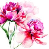 Beautiful Peony flowers - 65779777