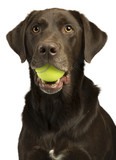 Dog with tennis ball