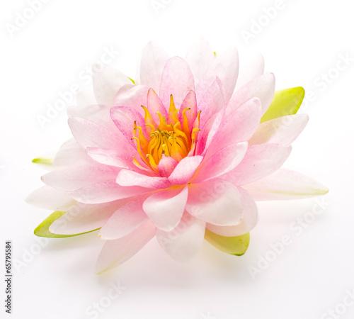 Deurstickers Lotusbloem Lotus flower isolated white background