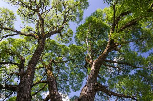 piekne-drzewo