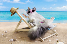 Cat Resting On A Sun Lounger