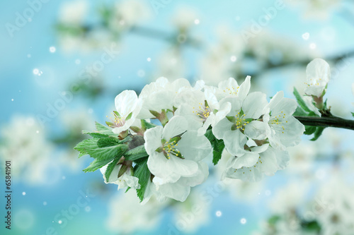 Staande foto Lelietje van dalen Beautiful blooming branches on light background, close-up
