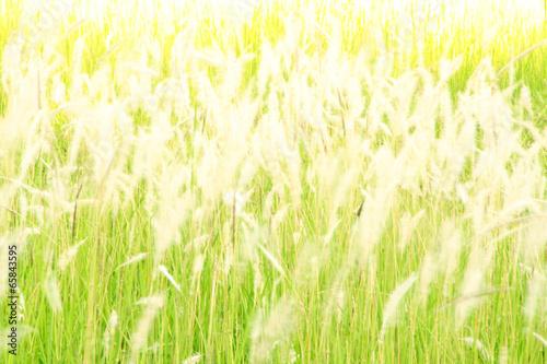 blurred flower grass at evening