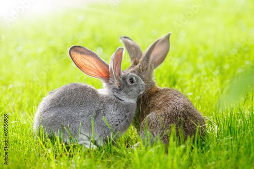 Fotografia Two rabbits
