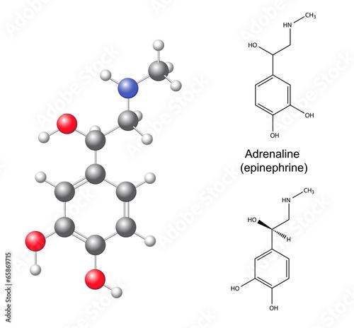 Fotografie, Obraz  Structural chemical formulas and model of adrenaline