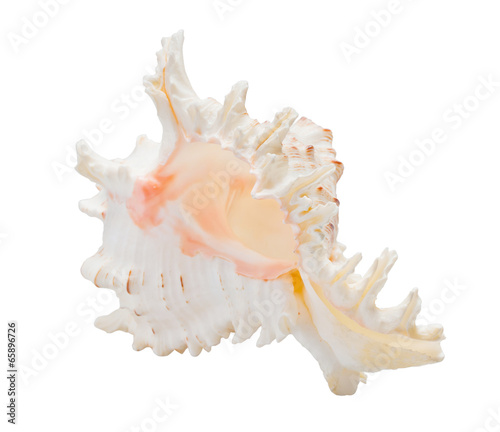 Marine sea shell Fototapet