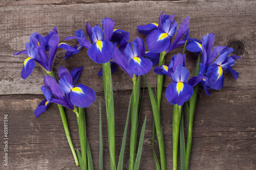 Poster Iris Blueflag or iris flower on grungy wooden background