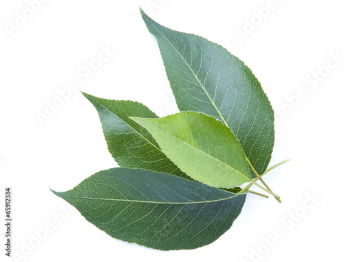 Fototapeta foliage on a white background obraz na płótnie