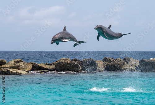 Dauphin Dolphins