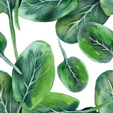 Spinach Seamless Pattern - 65938532