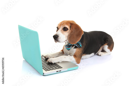 Photo  business concept pet dog using laptop computer