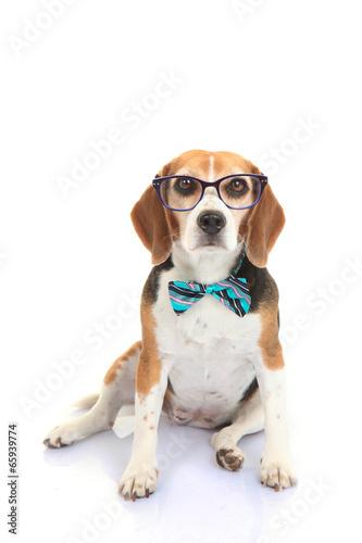 Fototapeta concept businnes pet or dog intelligence training obraz na płótnie