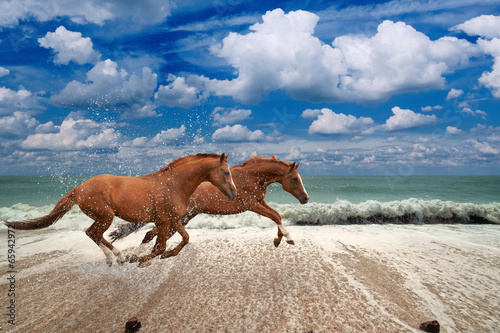 Horses running along seashore - 65942972