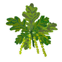 Oak Branch With Leaves And Catkins Vector Illustration