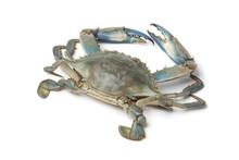 Single Blue Crab