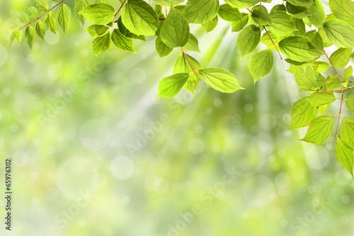 Staande foto Lente Frühling 323