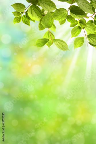 In de dag Lime groen Frühling 327