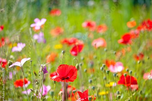 Fotobehang Tuin Prairie fleurie